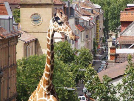 Giraffe in der Stadt